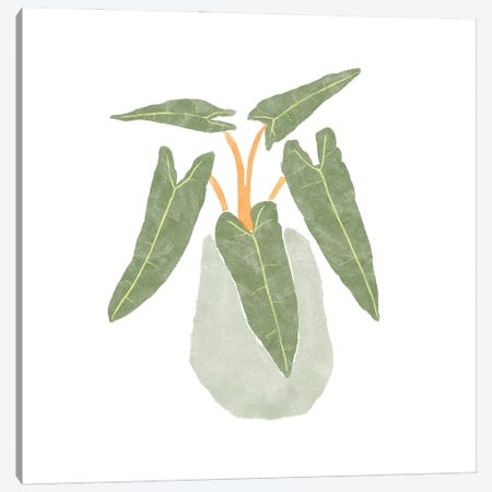 Philodendron Billietiae II Canvas Print #BNR45} by Bannarot Canvas Art Print