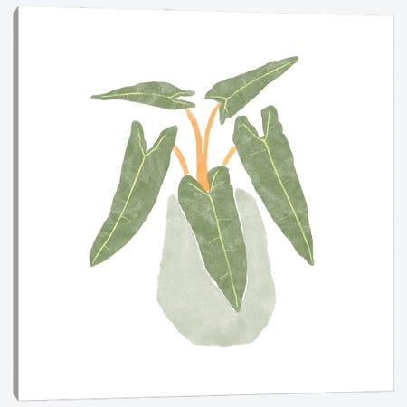 Philodendron Billietiae II Canvas Print #BNR45} by Bannarot Canvas Art Print