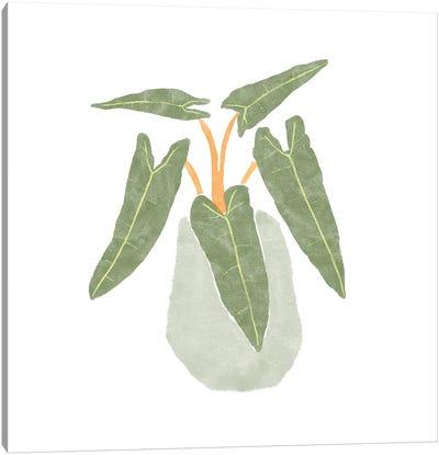 Philodendron Billietiae II Canvas Art Print