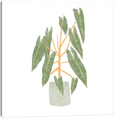 Philodendron Billietiae III Canvas Art Print