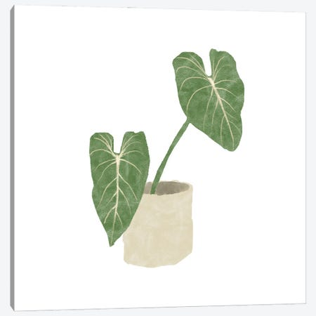Philodendron Gloriosum I Canvas Print #BNR47} by Bannarot Canvas Art Print