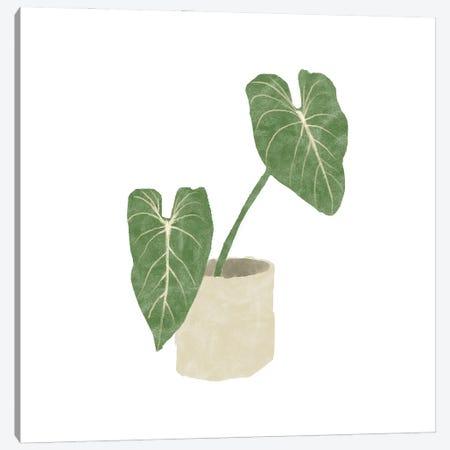 Philodendron Gloriosum I Canvas Print #BNR47} by Bannarot Canvas Art Print