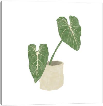 Philodendron Gloriosum I Canvas Art Print