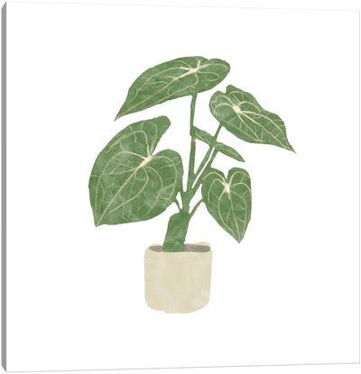 Philodendron Gloriosum II Canvas Art Print