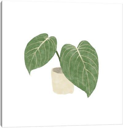 Philodendron Gloriosum III Canvas Art Print