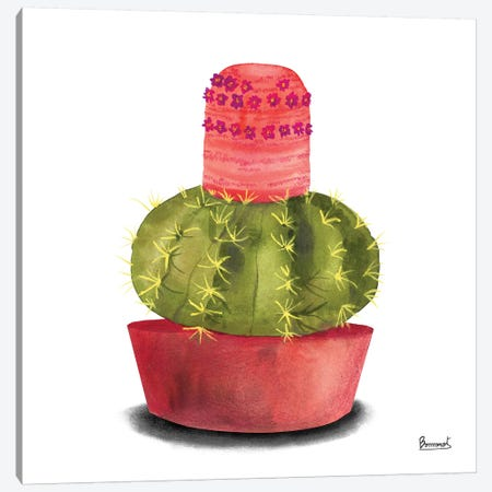 Cactus Flowers IV Canvas Print #BNR4} by Bannarot Canvas Artwork