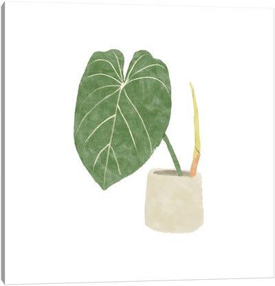 Philodendron Gloriosum V Canvas Art Print