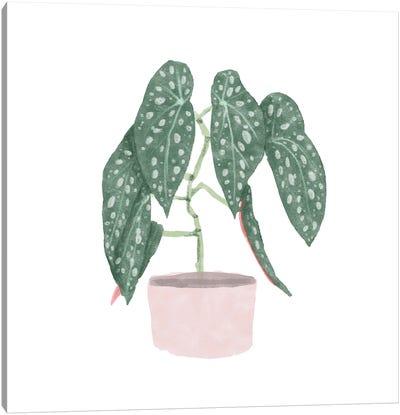 Polka Dot Begonia III Canvas Art Print