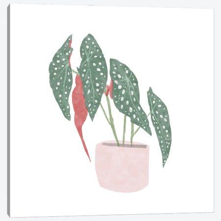 Polka Dot Begonia IV Canvas Print #BNR52} by Bannarot Canvas Art Print