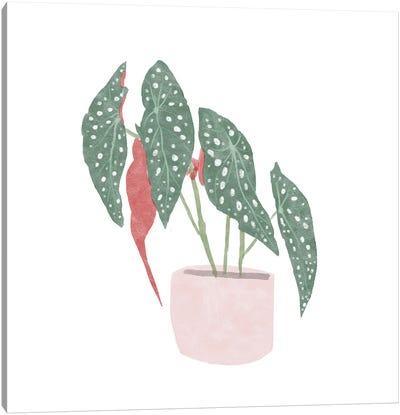Polka Dot Begonia IV Canvas Art Print