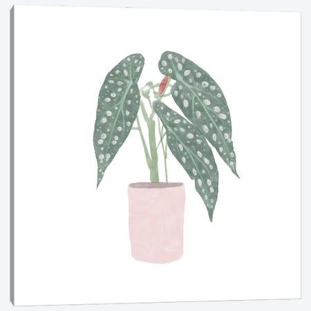 Polka Dot Begonia V Canvas Print #BNR53} by Bannarot Canvas Art Print