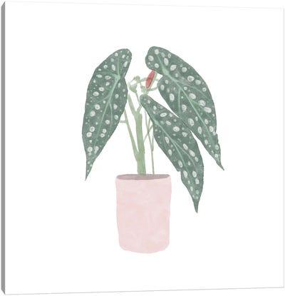 Polka Dot Begonia V Canvas Art Print
