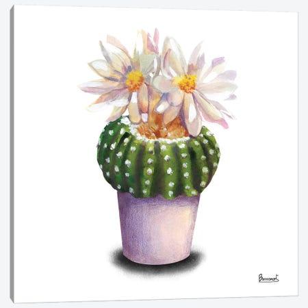 Cactus Flowers IX Canvas Print #BNR5} by Bannarot Canvas Artwork