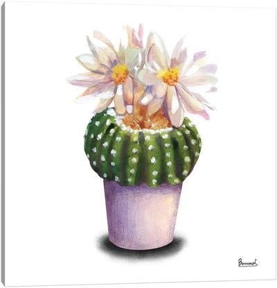 Cactus Flowers IX Canvas Art Print