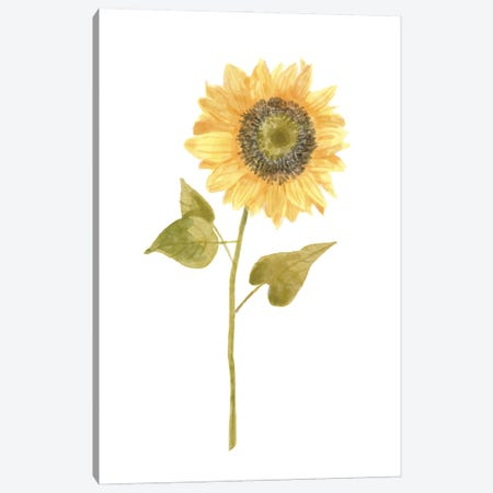 Single Sunflower portrait I Canvas Print #BNR61} by Bannarot Canvas Artwork