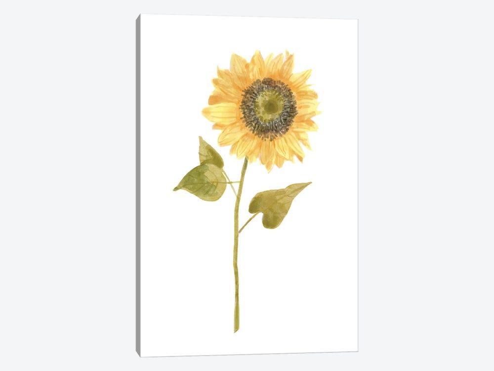 Single Sunflower portrait I by Bannarot 1-piece Canvas Wall Art