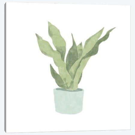 Snake Plant II Canvas Print #BNR64} by Bannarot Art Print