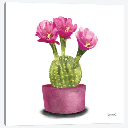 Cactus Flowers V Canvas Print #BNR6} by Bannarot Canvas Wall Art