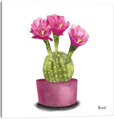 Cactus Flowers V Canvas Art Print