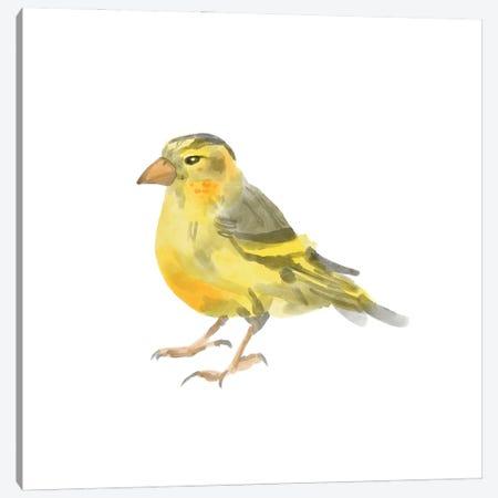 Songbird I Canvas Print #BNR71} by Bannarot Canvas Art Print