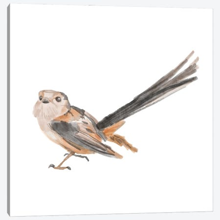 Songbird IV Canvas Print #BNR74} by Bannarot Canvas Wall Art
