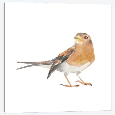 Songbird V Canvas Print #BNR75} by Bannarot Canvas Artwork