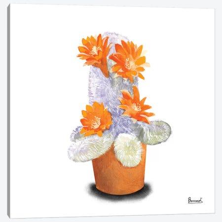 Cactus Flowers VI Canvas Print #BNR7} by Bannarot Canvas Wall Art