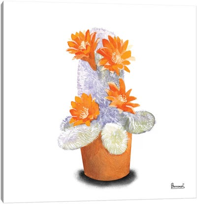 Cactus Flowers VI Canvas Art Print