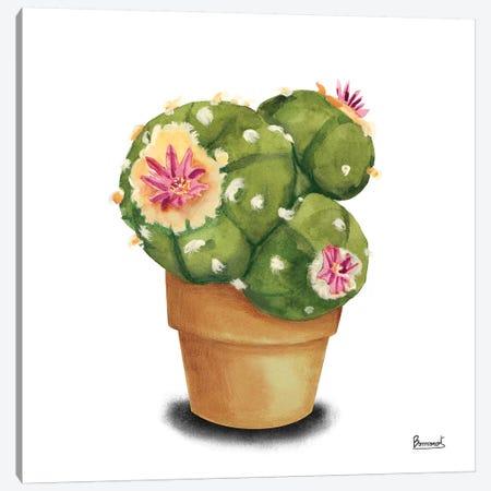 Cactus Flowers VII Canvas Print #BNR8} by Bannarot Art Print