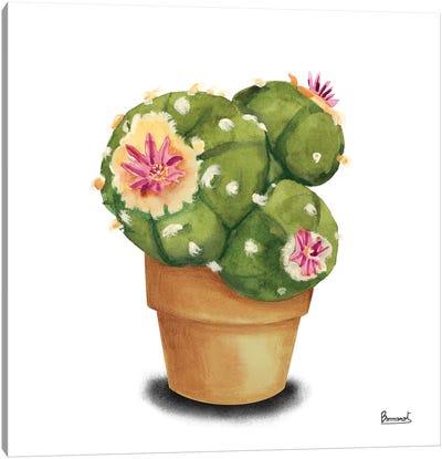 Cactus Flowers VII Canvas Art Print