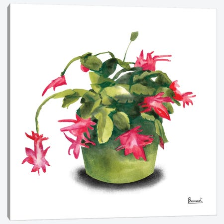 Cactus Flowers VIII Canvas Print #BNR9} by Bannarot Canvas Art Print