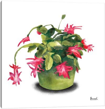 Cactus Flowers VIII Canvas Art Print