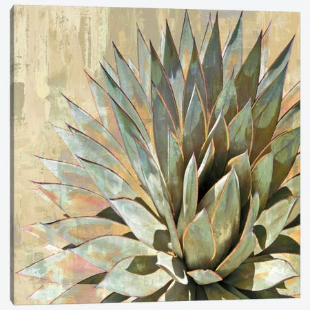 Succulent I Canvas Print #BNS1} by Lindsay Benson Canvas Wall Art