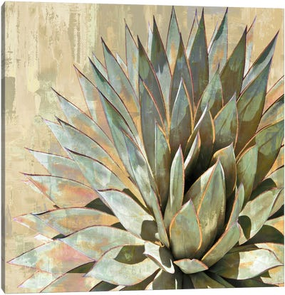 Succulent I Canvas Art Print