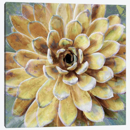 Succulent II Canvas Print #BNS2} by Lindsay Benson Canvas Art