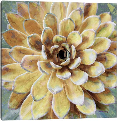 Succulent II Canvas Art Print