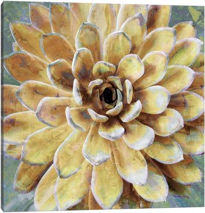 Succulent II Canvas Art Print