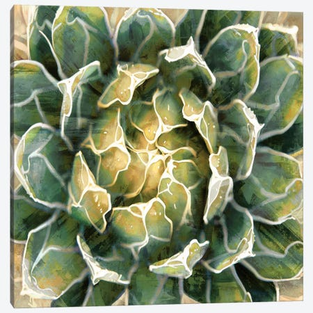 Succulent III Canvas Print #BNS3} by Lindsay Benson Canvas Artwork