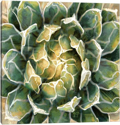 Succulent III Canvas Art Print
