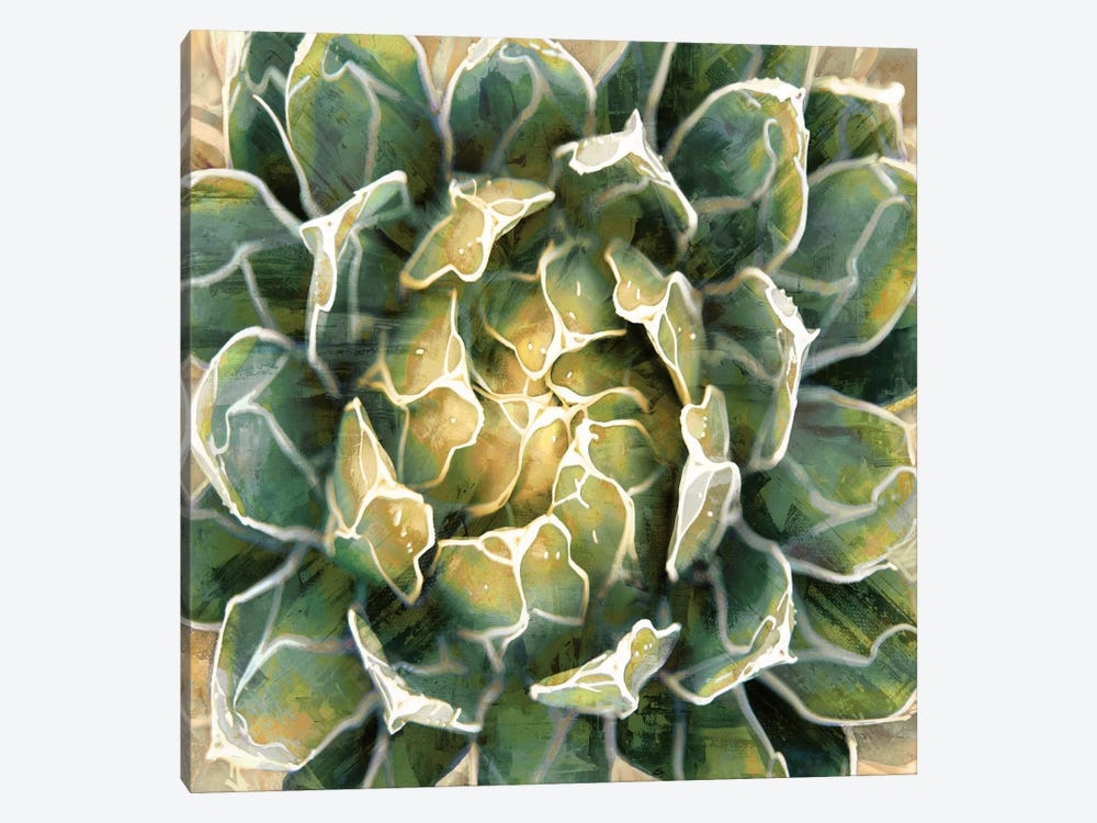 Succulent III by Lindsay Benson 1-piece Canvas Art