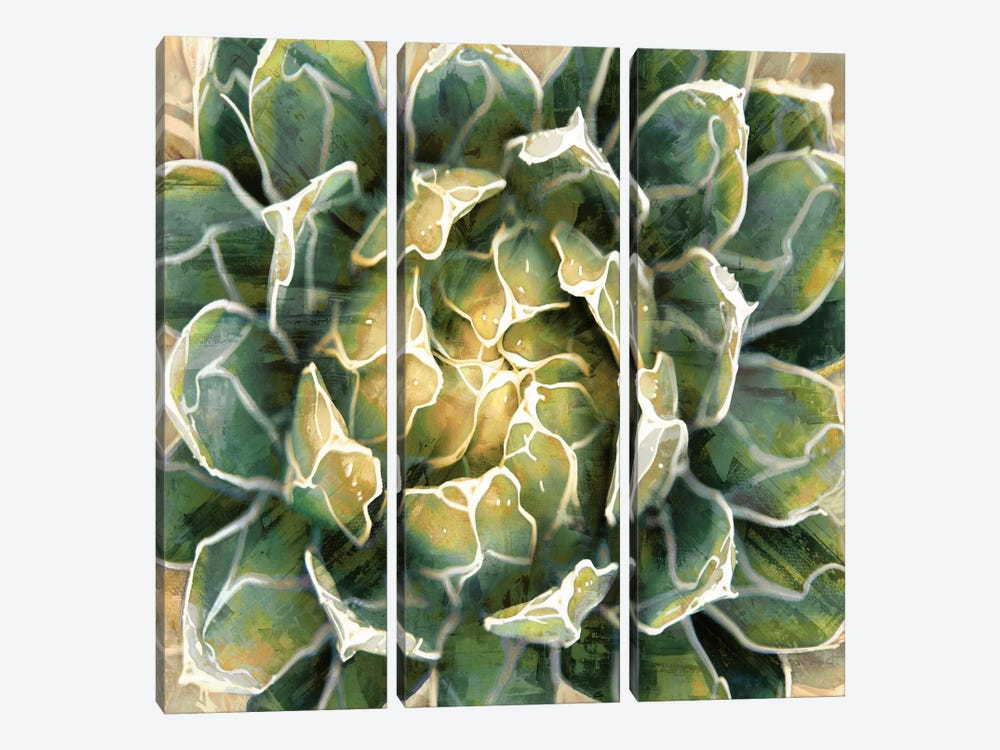 Succulent III by Lindsay Benson 3-piece Canvas Wall Art