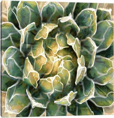 Succulent III Canvas Art Print