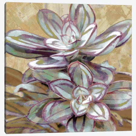 Succulent IV Canvas Print #BNS4} by Lindsay Benson Canvas Print