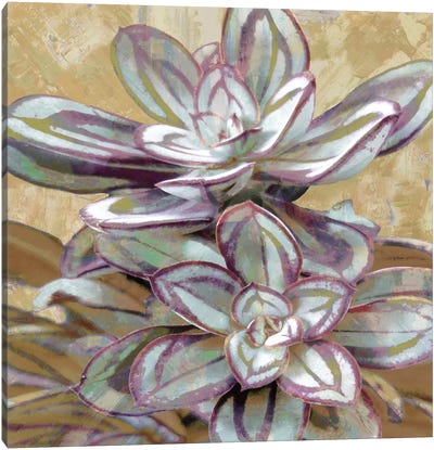 Succulent IV Canvas Art Print