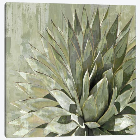 Succulent V Canvas Print #BNS5} by Lindsay Benson Canvas Art Print