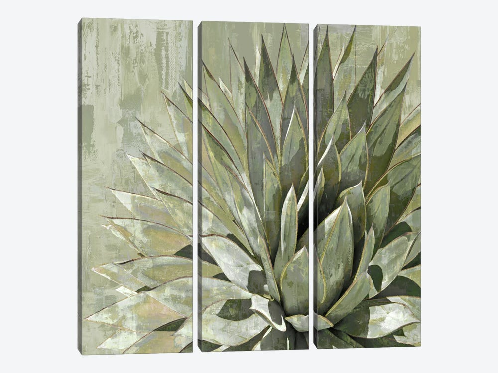 Succulent V by Lindsay Benson 3-piece Canvas Wall Art