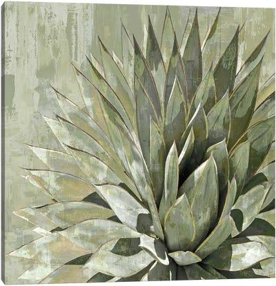 Succulent V Canvas Art Print