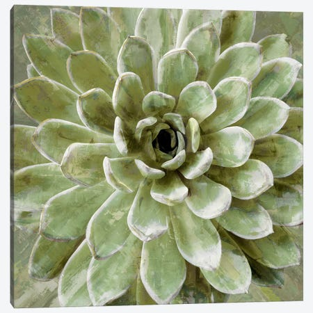 Succulent VI 3-Piece Canvas #BNS6} by Lindsay Benson Art Print
