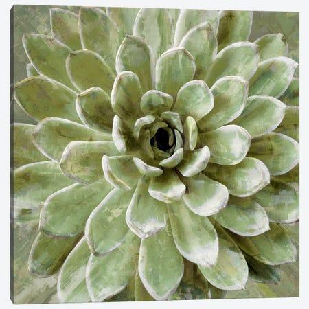 Succulent VI Canvas Print #BNS6} by Lindsay Benson Art Print