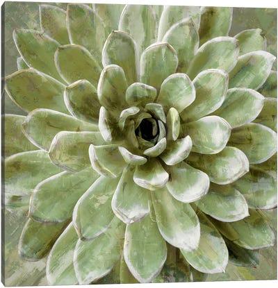 Succulent VI Canvas Art Print